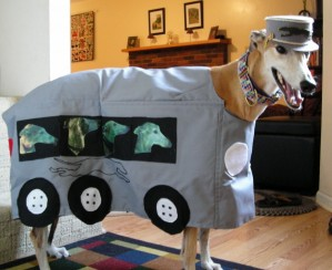 Here kitty kitty, let's get you into that Kit Kat bar costume (courtesy of http://www.greyhoundsreachthebeach.com)